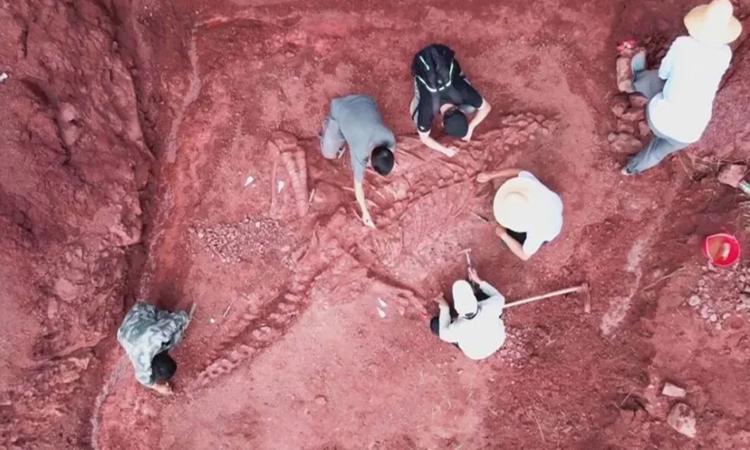 Nhóm nghiên cứu gấp rút khai quật hóa thạch khủng long Lufengosaurus. Ảnh: China News.