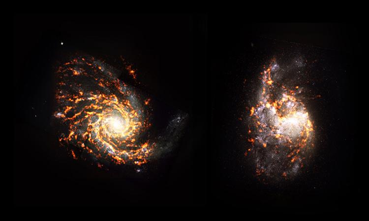 Ảnh chụp độ phân giải cao về hai thiên hà NGC 4254 (trái) và NGC 1385. Ảnh: PHANGS.