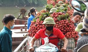 Người dân nườm nượp chở vải qua cầu phao đi bán