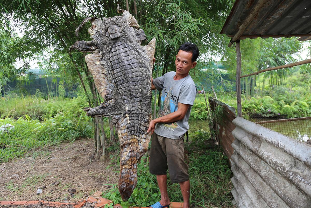 Bộ da cá sấu được anh Thanh phơi khôi, cuối tháng 4. Ảnh: Đình Văn.