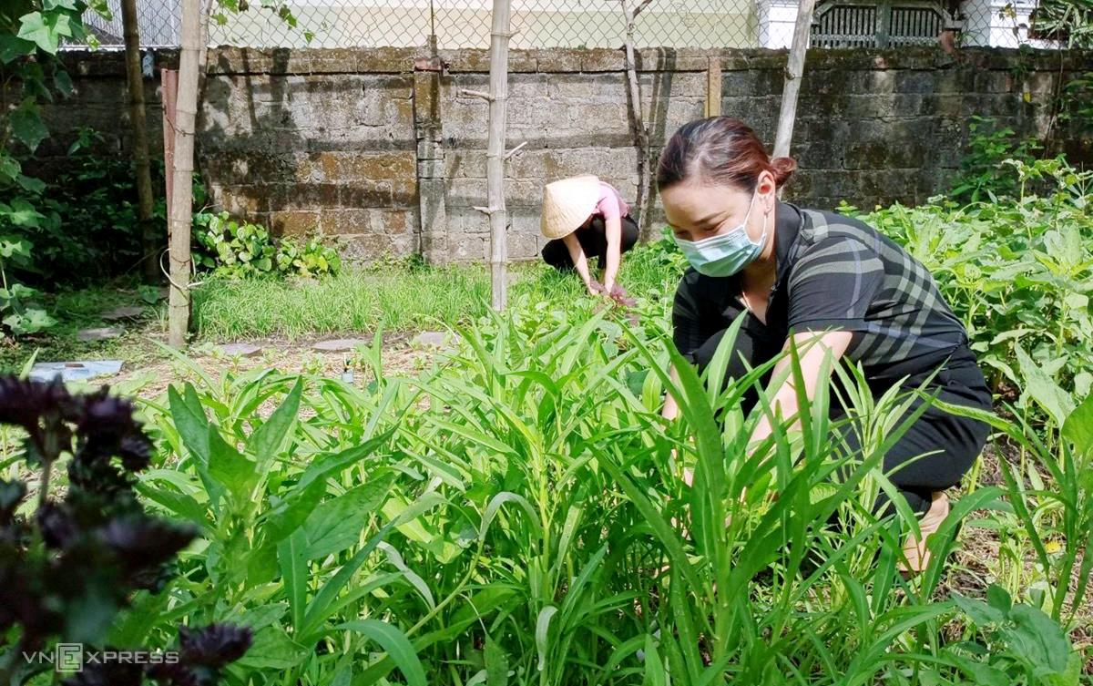 Nhiều cán bộ Hội phụ nữ còn hái rau trong vườn hỗ trợ những chị em có hoàn cảnh khó khăn. Ảnh: Đức Hùng