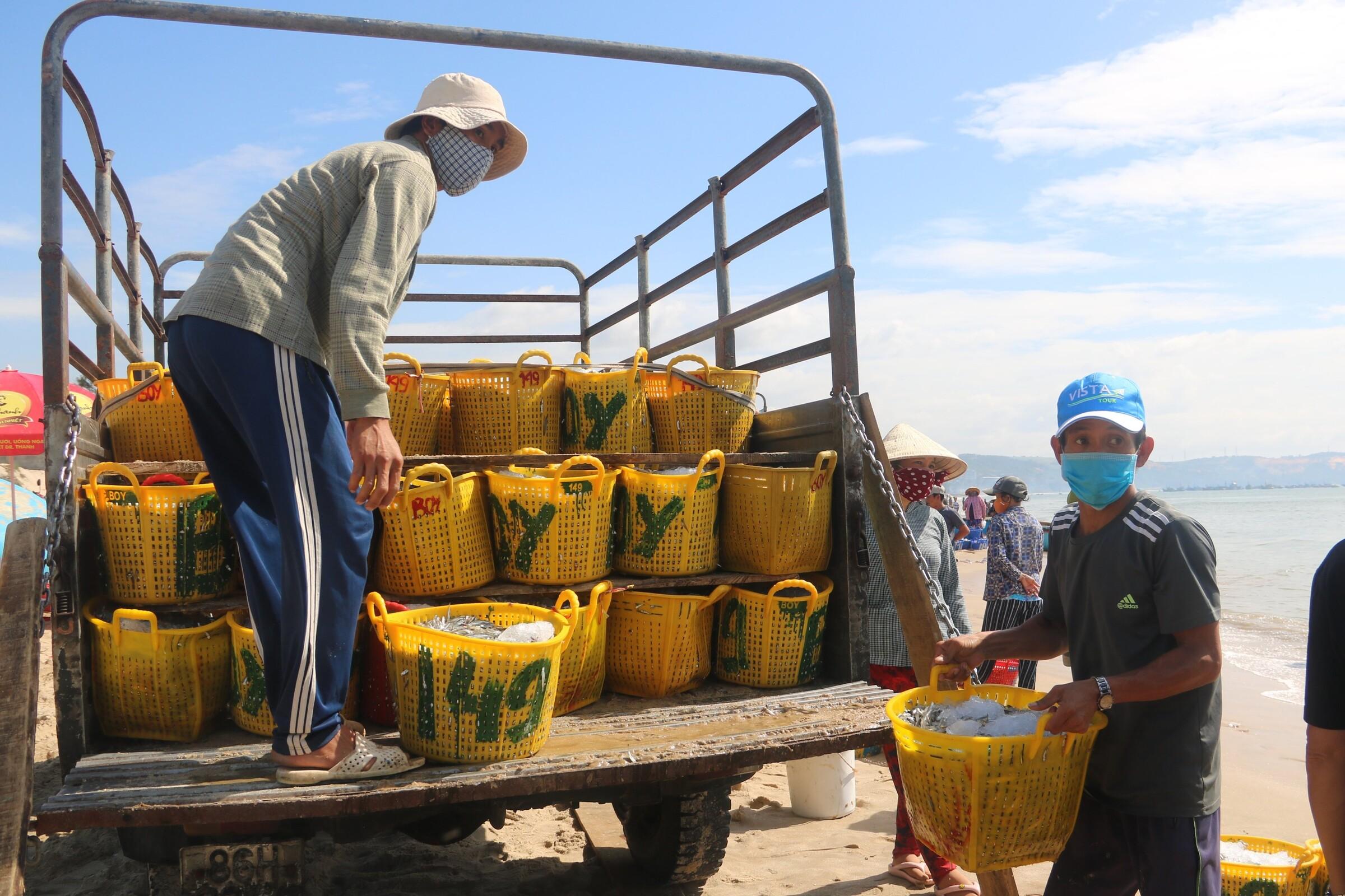 Nhân công đang bốc cá cơm lên xe ở bãi sau Mũi Né, chở về làm nước mắm. Ảnh: Việt Quốc.