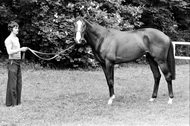 Shergar ở trại ngựa, 6/6/1981. Ảnh: Getty Images