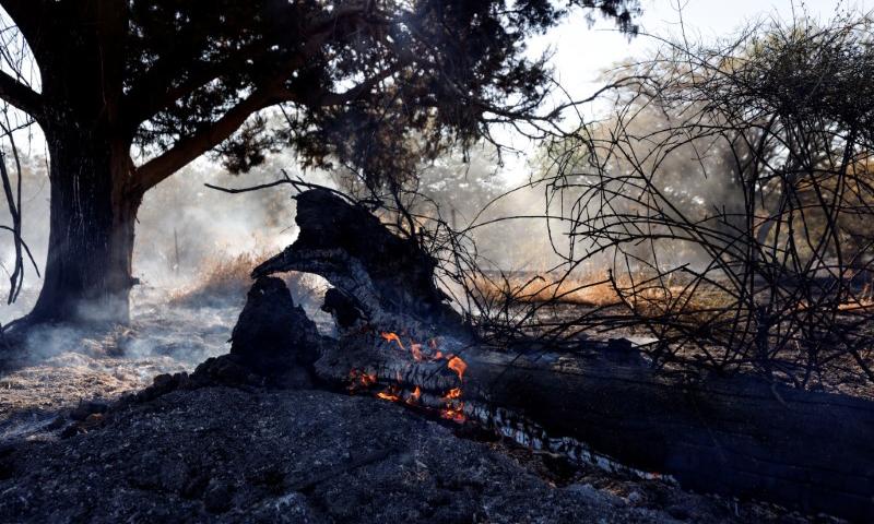 Một đám cháy trên cánh đồng sau khi dân quân Hamas thả bóng bay buộc chất cháy vào phía nam Israel hôm 15/6. Ảnh: Reuters.
