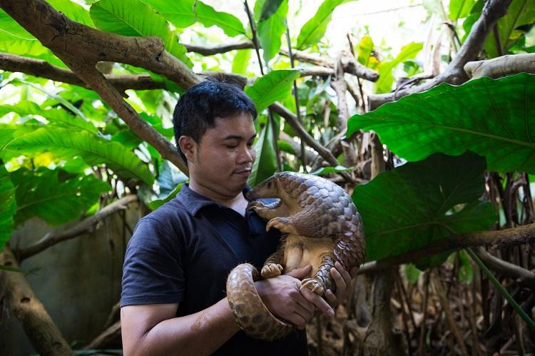 Tê tê được chăm sóc trong chuồng nuôi tự nhiên tại Trung tâm. Ảnh: SVW.