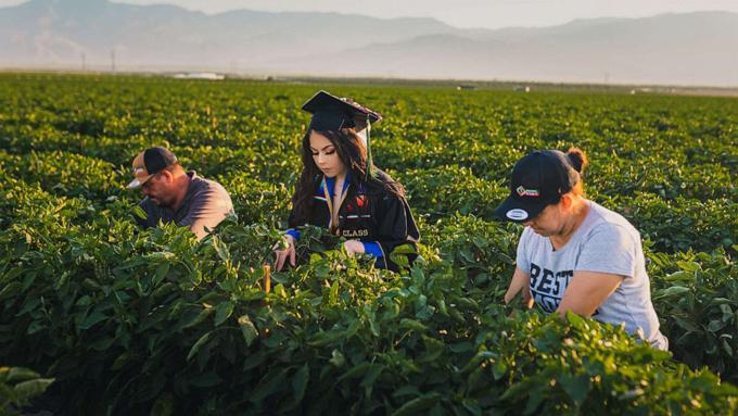 Jennifer Rocha chụp ảnh tốt nghiệp đại học cùng bố mẹ trên cánh đồng, nơi đã giúp cô có tiền đi học. Ảnh: ABC News.