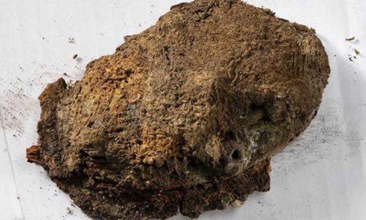 Vải thêu bám trên ghim cài hình con rùa được tìm thấy trong mộ người phụ nữ Viking. Ảnh: NTNU.
