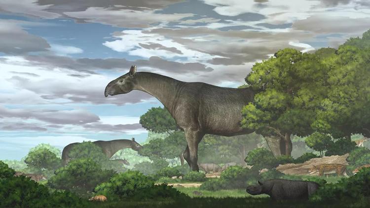 Mô phỏng tê giác Paraceratherium linxiaense kiếm ăn trên cao nguyên Tây Tạng. Ảnh: Yu Chen.
