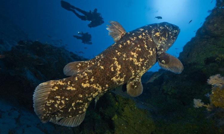Cá vây tay ở vịnh Sodwana, Nam Phi. Ảnh: National Geographic.