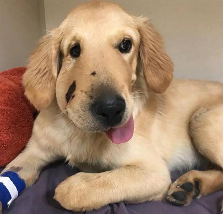 Marley đang dần phục hồi sức khỏe sau một thời gian điều trị. Ảnh: Alex Loredo.