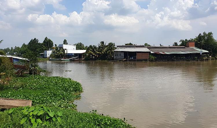 Đoạn sông Cần Thơ qua xã Tân Thới, huyện Phong Điền xảy ra tình trạng cá chết. Ảnh: Hưng Lợi