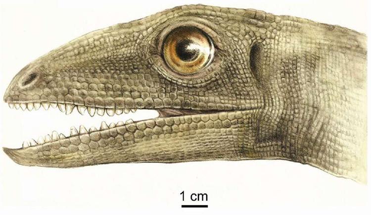 Mô phỏng khuôn mặt của khủng long Silesaurus opollensis. Ảnh: MałgorzataCzaja.
