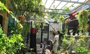 Cải tạo sân nhà thành khuôn viên xanh mát