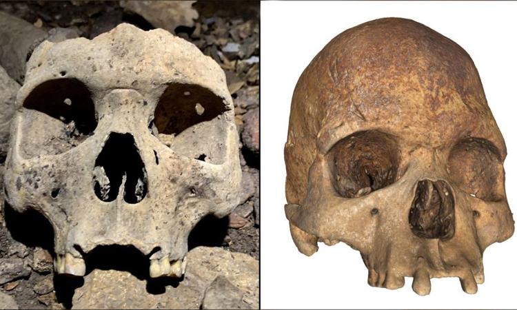 Các hộp sọ 500 năm tuổi bị thiếu răng cửa: Ảnh: C. Gerin/P. Mora /Antiquity Publications Ltd.