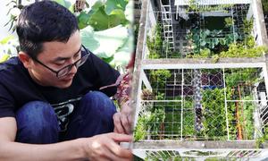 Ông bố làm bể cá, vườn rau trĩu quả trên sân thượng