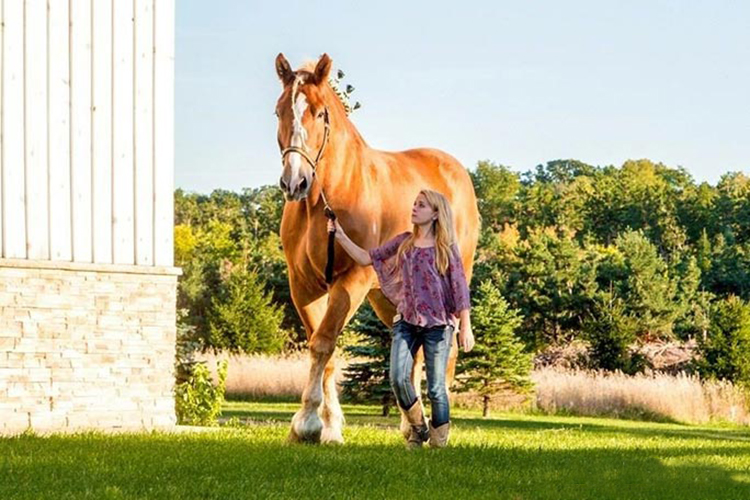Ngựa Big Jake đi dạo trong trang trại ở Wisconsin, Mỹ. Ảnh: Sách Kỷ lục Guinness.