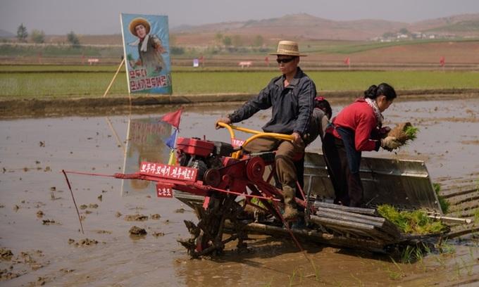 Nông dân cấy lúa ở thành phố Nampho, tỉnh Chongsan-ri, Triều Tiên, hồi tháng 5/2019. Ảnh: AFP.