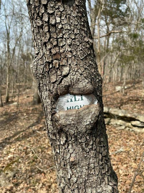 Thân cây này sắp hô biến biển báo trên chặng đường leo núi ở Alabama, Mỹ. Ảnh: All Trails