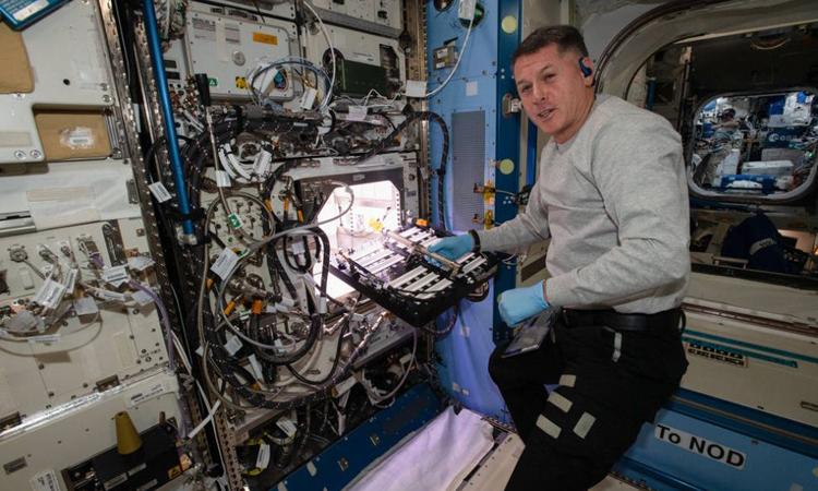 Phi hành gia chăm sóc các hạt giống ớt trên trạm ISS hôm 12/7. Ảnh: NASA.