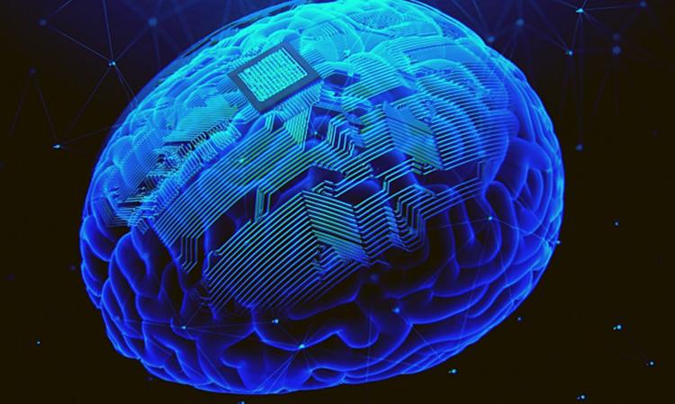 Bản vẽ 3D khi cấy mảng đa điện cực lên vùng vỏ não.