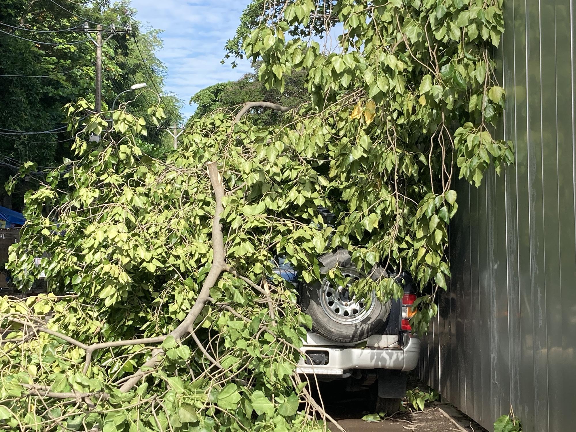 Một ôtô bị cành cây gãy, rơi xuống phủ kín sau trận gió lớn chiều 19/7. Ảnh: Phạm Trung