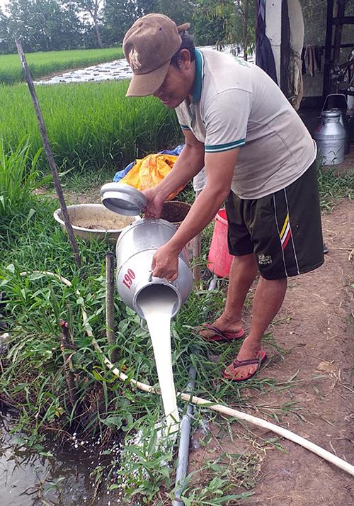 Người dân ở xã Đại Tâm, huyện Mỹ Xuyên, tỉnh Sóc Trăng đổi bỏ sữa bò tươi, ngày 22/7. Ảnh: Châu Thành
