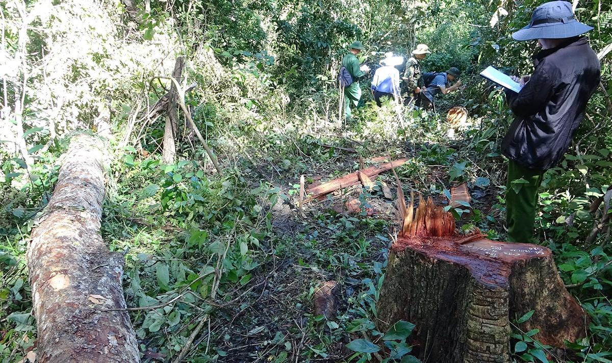 Cơ quan điều tra khám nghiệm các khu vực rừng bị phá. Ảnh: Văn Thành.