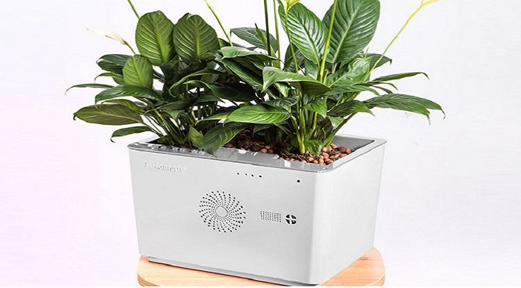 Dự án TreeOtek đem sản phẩm máy lọc không khí tích hợp cây thực vật có thể hấp thụ và chuyển hoá các chất ô nhiễm một cách tự nhiên, lọt top 20 cuộc thi. Ảnh: TreeOtek.