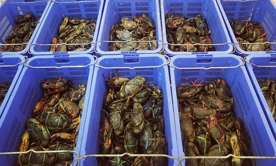 Cua biển trong nhà hàng hải sản ở Punggol. Ảnh: Facebook/House of Seafood.