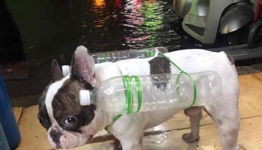 Tuy nhiên cún cưng dường như chẳng thích lắm với phát minh này.