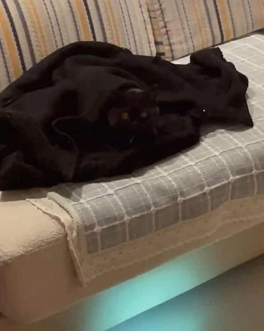 Con mèo nằm trên chiếc chăn cùng màu.