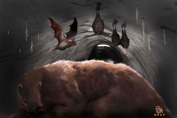 Desmodus draculae trong hang động của một con lười khổng lồ đã tuyệt chủng. Ảnh: Bảo tàng Khoa học tự nhiên Miramar.