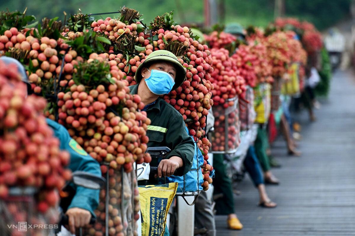 Nông dân Bắc Giang xếp hàng chờ đi cân vải thiều, tháng 6/2021. Ảnh: Giang Huy