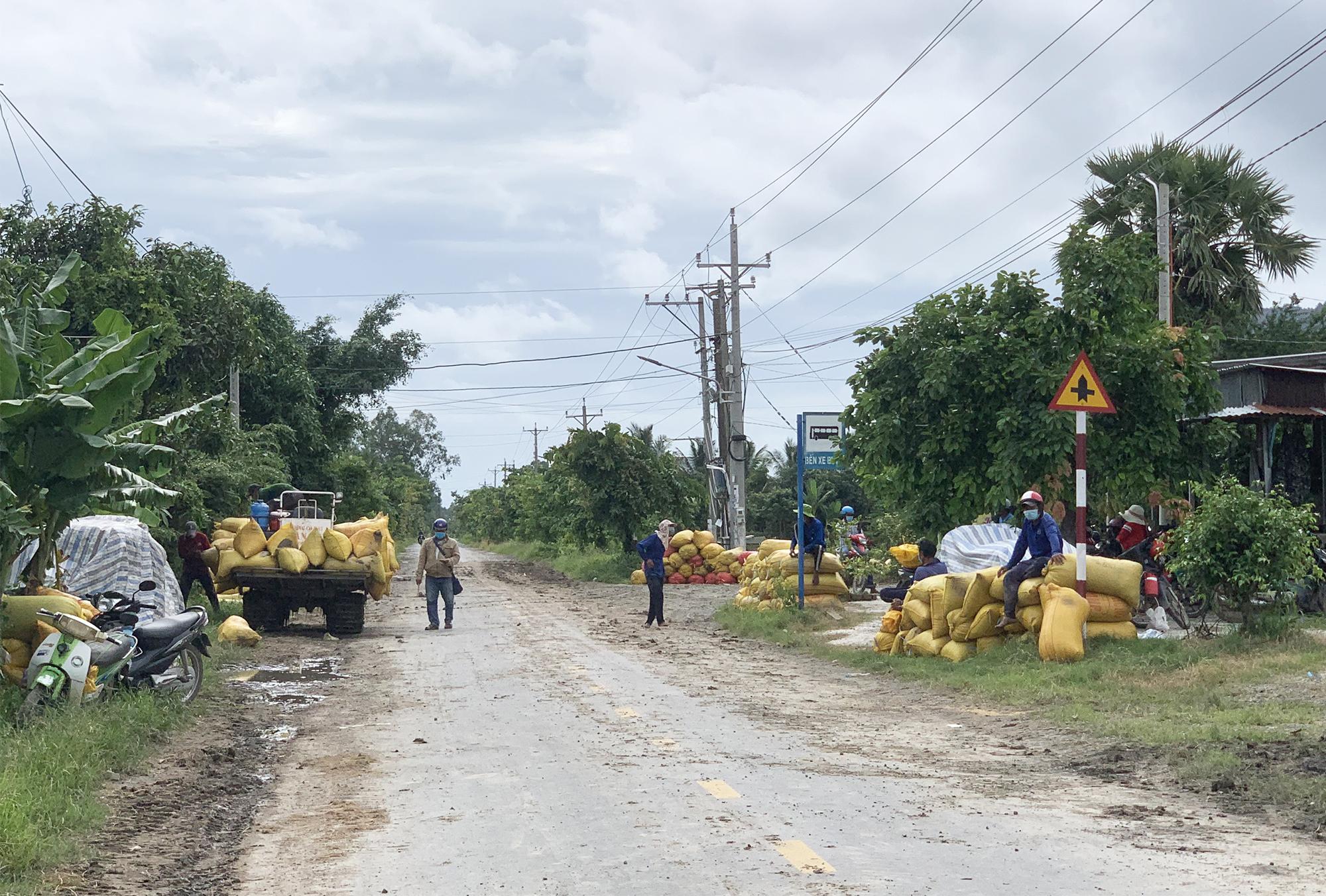 Lúa được chất ở đường chờ đưa đi tiêu thụ. Ảnh: Văn Nguyễn