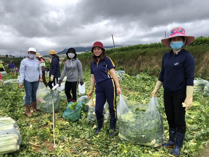 Chị Trần Thị Nhật Khuyên (thứ hai từ phải qua) cùng các đồng nghiệp thu hoạch cần tây tại một vườn rau ở Đà Lạt. Ảnh: NVCC.