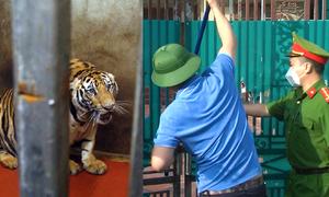 Cảnh sát đột kích hai nhà dân nuôi nhốt hổ