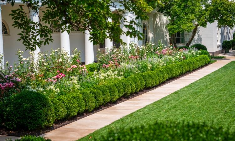 Cựu đệ nhất phu nhân Mỹ Melania Trump đăng ảnh những khóm hoa nở rộ trong Vườn Hồng Nhà Trắng. Ảnh: Twitter/@OfficeofMelania.