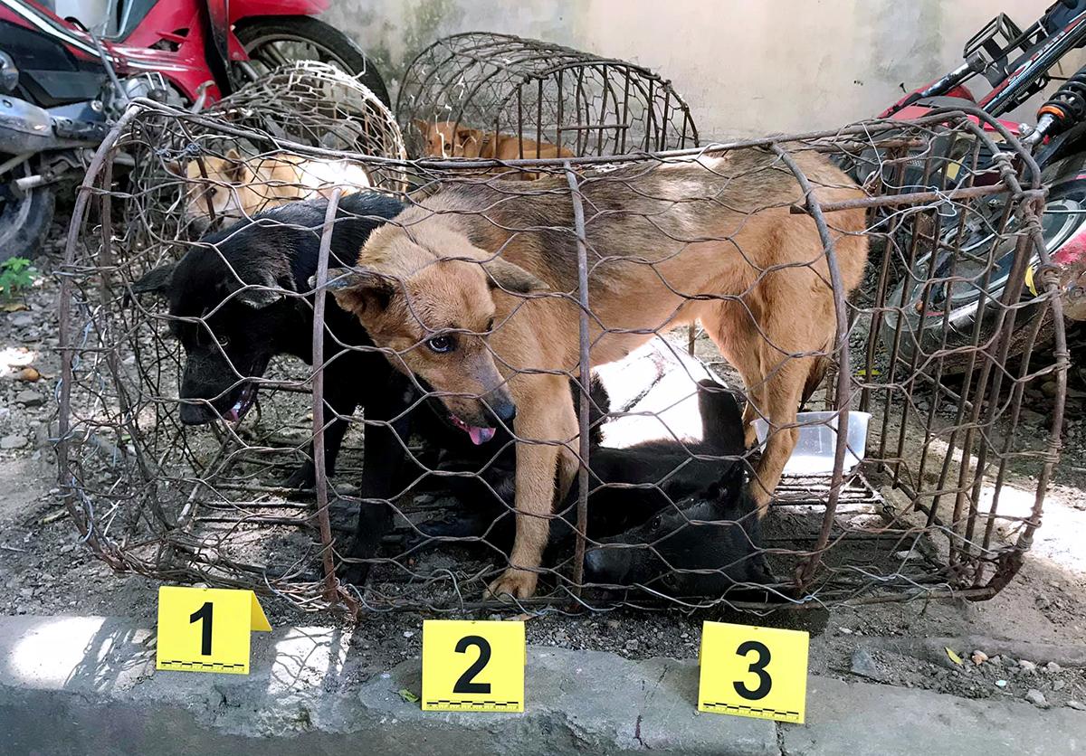 Các con chó được cảnh sát thu tại nhà của Thắng. Ảnh: Công an cung cấp