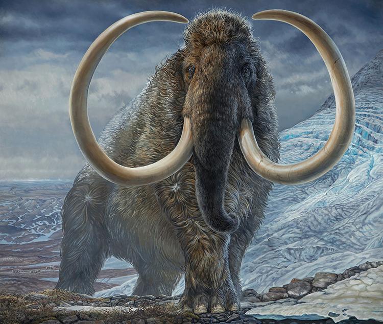 Mô phỏng một con voi ma mút lông mượt đực trưởng thành. Ảnh: Reuters