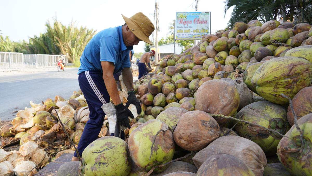 Công nhân lột dừa tại cơ sở thu mua xã Bình Hòa (Giồng Trôm) hồi tháng 4. Ảnh: Hoàng Nam