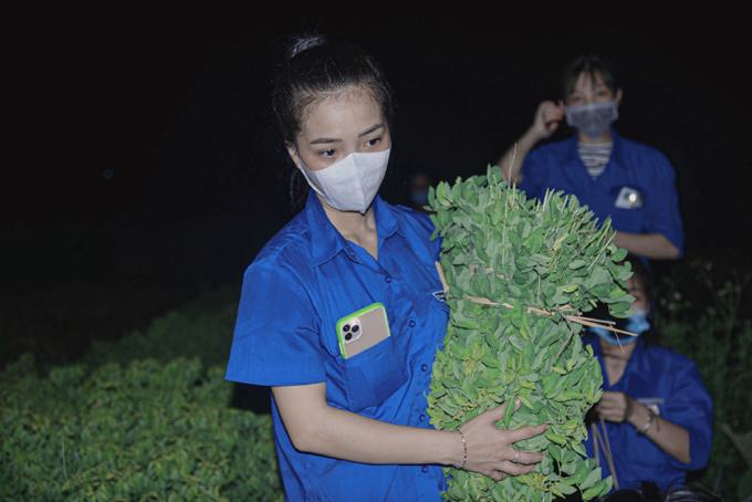 Liên cùng các đoàn viên, thanh niên xã Tích Giang hái rau ngót, rau muống đêm 6/8 cho kịp đơn hàng sáng hôm sau. Ảnh: Nhân vật cung cấp.