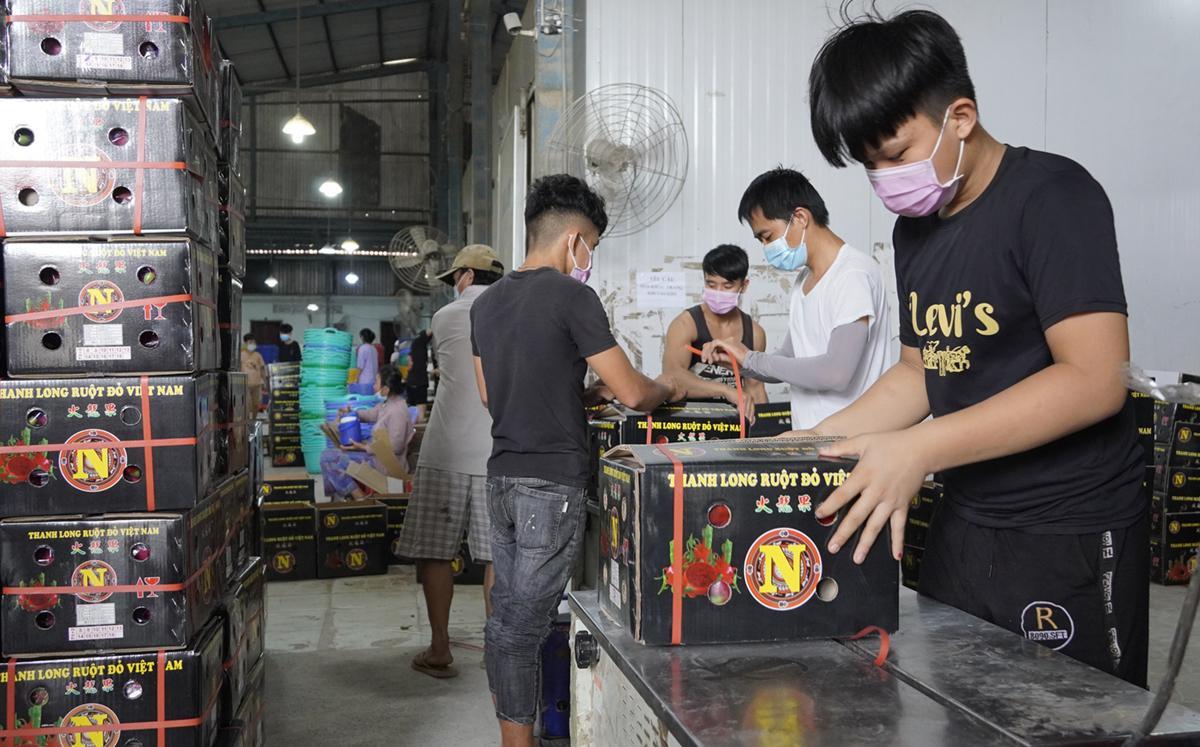 Công nhân đóng gói thanh long xuất khẩu tại kho Vạn Phát Thành (Hiệp Thạnh, Châu Thành) trưa 19/8. Ảnh: Hoàng Nam