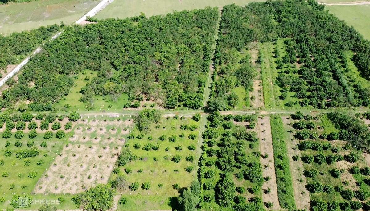 Vườn bưởi của người dân xã Hương Trạch. Ảnh: Đức Hùng