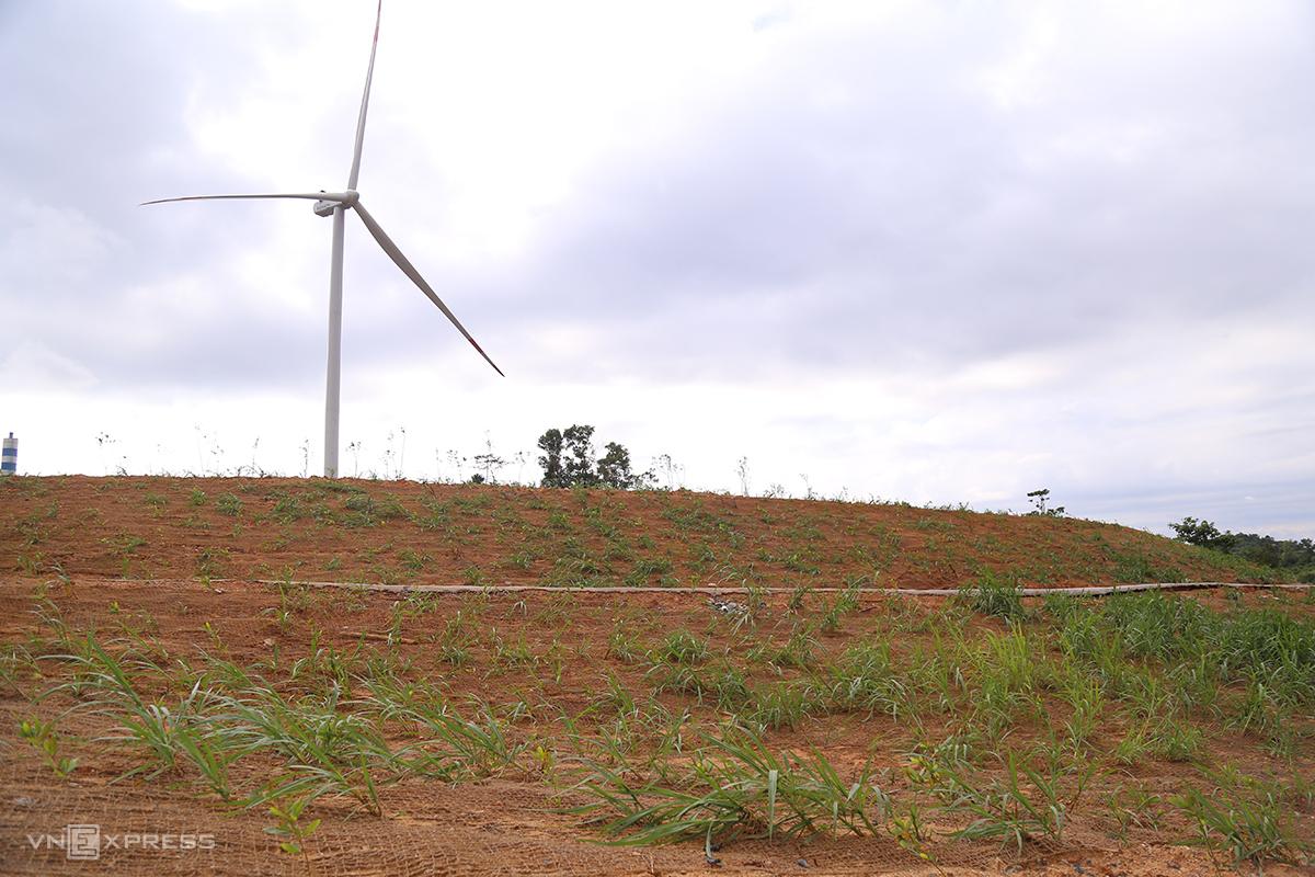 Điện gió Hướng Tân trải lưới xơ dừa kết hợp trồng cây tràm, cỏ voi để giữ đất. Ảnh: Hoàng Táo