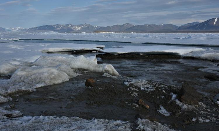 Hòn đảo diện tích 60 m x 30 m là vùng đất gần Bắc Cực nhất. Ảnh: Morten Rasch/Đại học Copenhagen