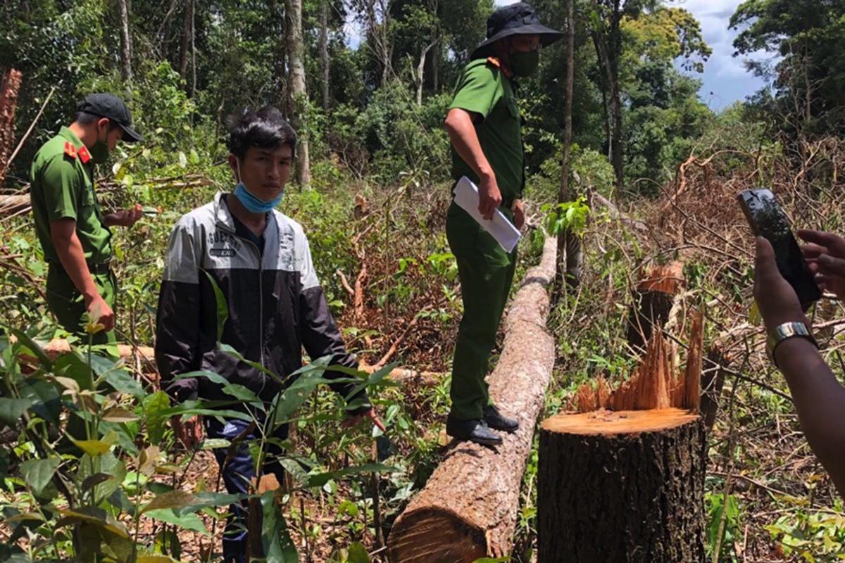 Hiện trường vụ phá gần 1.300 ha rừng sản xuất. Ảnh: Công an cung cấp