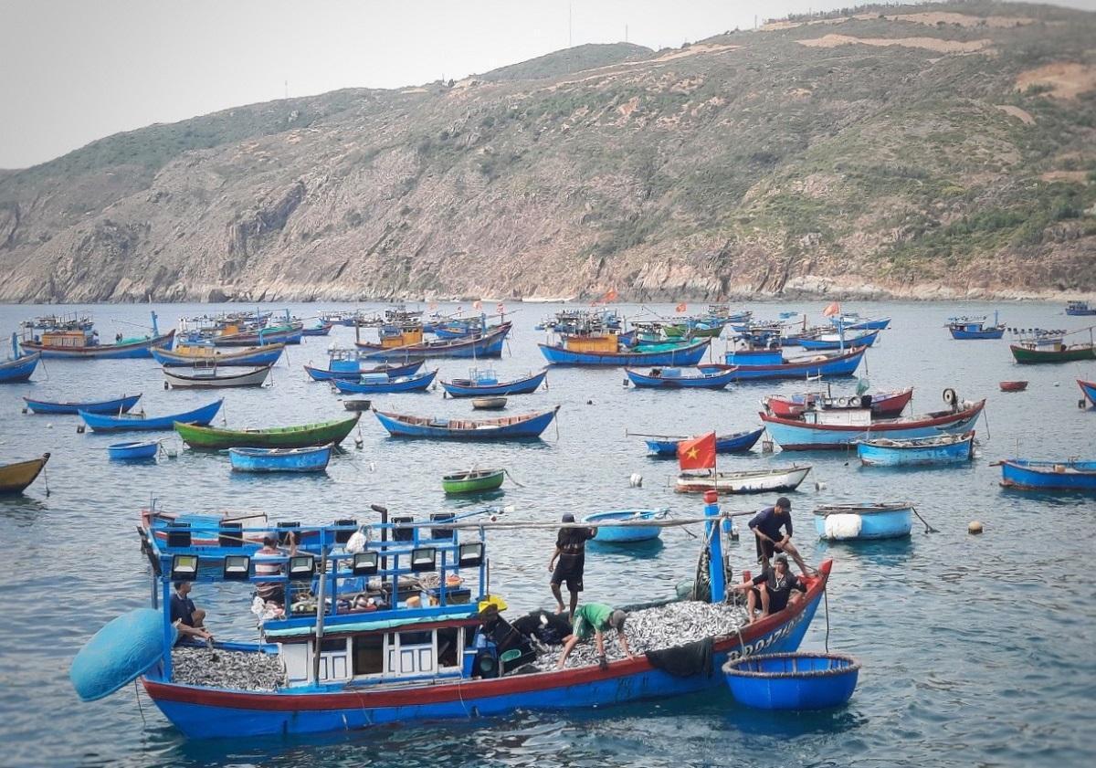 Tàu cá xã Nhơn Lý về bờ sau một đêm đánh cá nục suông, sáng 4/9. Ảnh: Hữu Đảo.