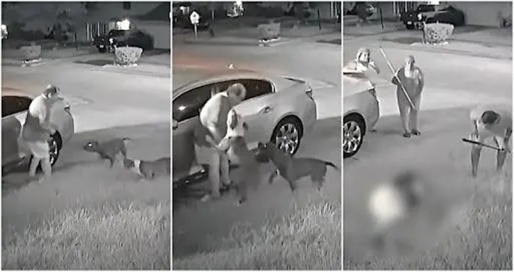 Hiện trường cụ ông gốc Á bị hai con chó pitbull tấn công ở thành phố Houston, bang Texas, Mỹ hôm 26/8. Ảnh: Nextshark.
