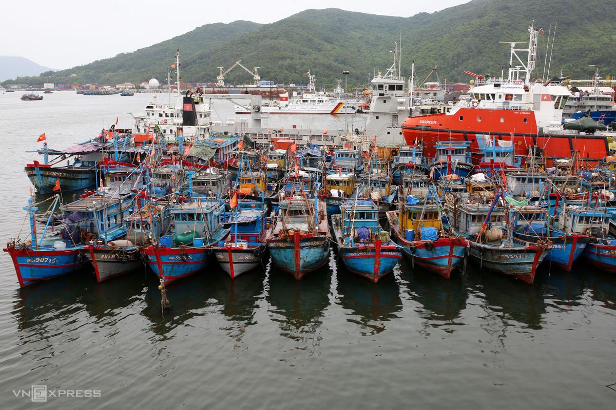 Các tàu thuyền lớn dừng hoạt động, neo đận kín trong âu thuyền và ngoài cửa vịnh Mân Quang, Đà Nẵng. Ảnh: Nguyễn Đông.