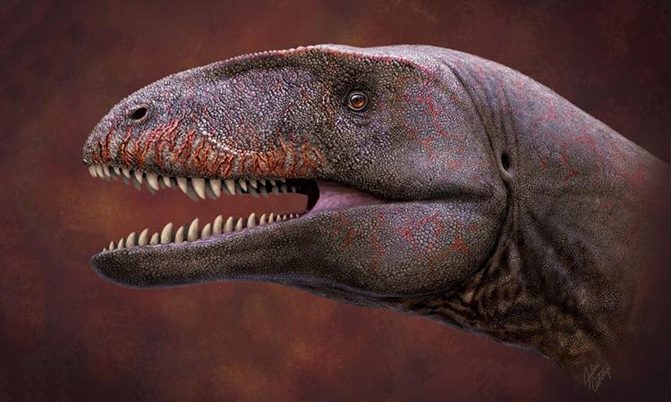 Mô phỏng khuôn mặt của khủng long săn mồi Ulughbegsaurus uzbekistanensis. Ảnh: Julius T. Csotonyi
